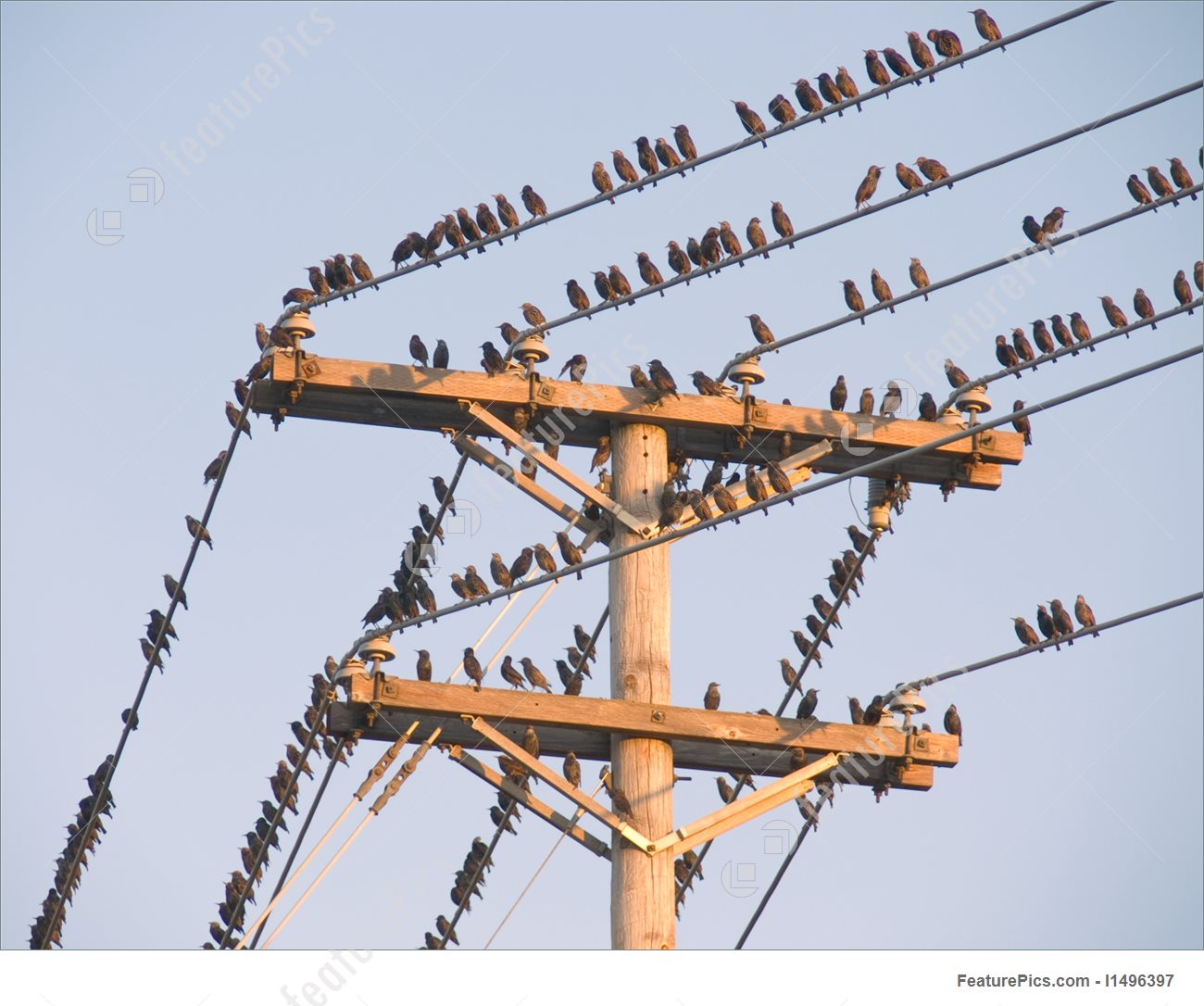 birds-on-a-wire-stock-picture-496397